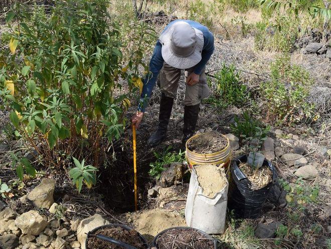 Naturefund Für Mehr Vielfalt Bäume Pflanzen